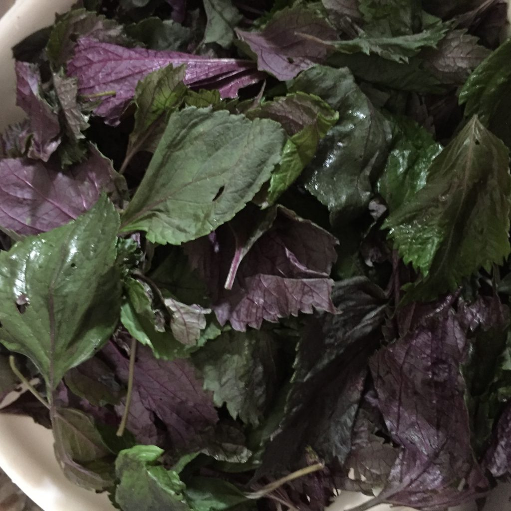 赤紫蘇の葉っぱのみ